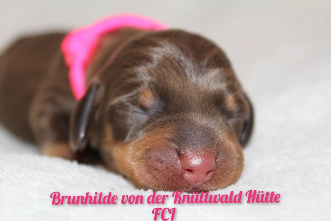 20210402_Brunhilde